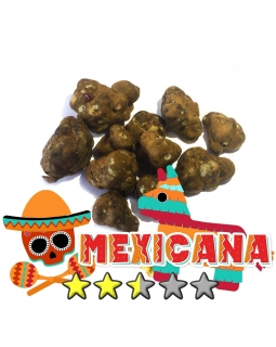 Budget Truffles | Psilocybe Mexicana € 0.00 Magic Truffles