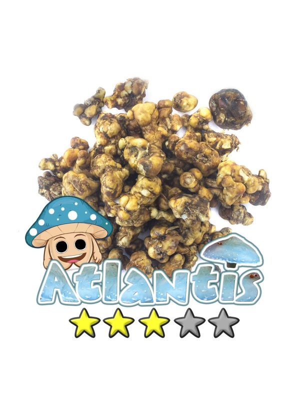 Budget Truffels   Psilocybe Atlantis € 11.95 Magische Truffels