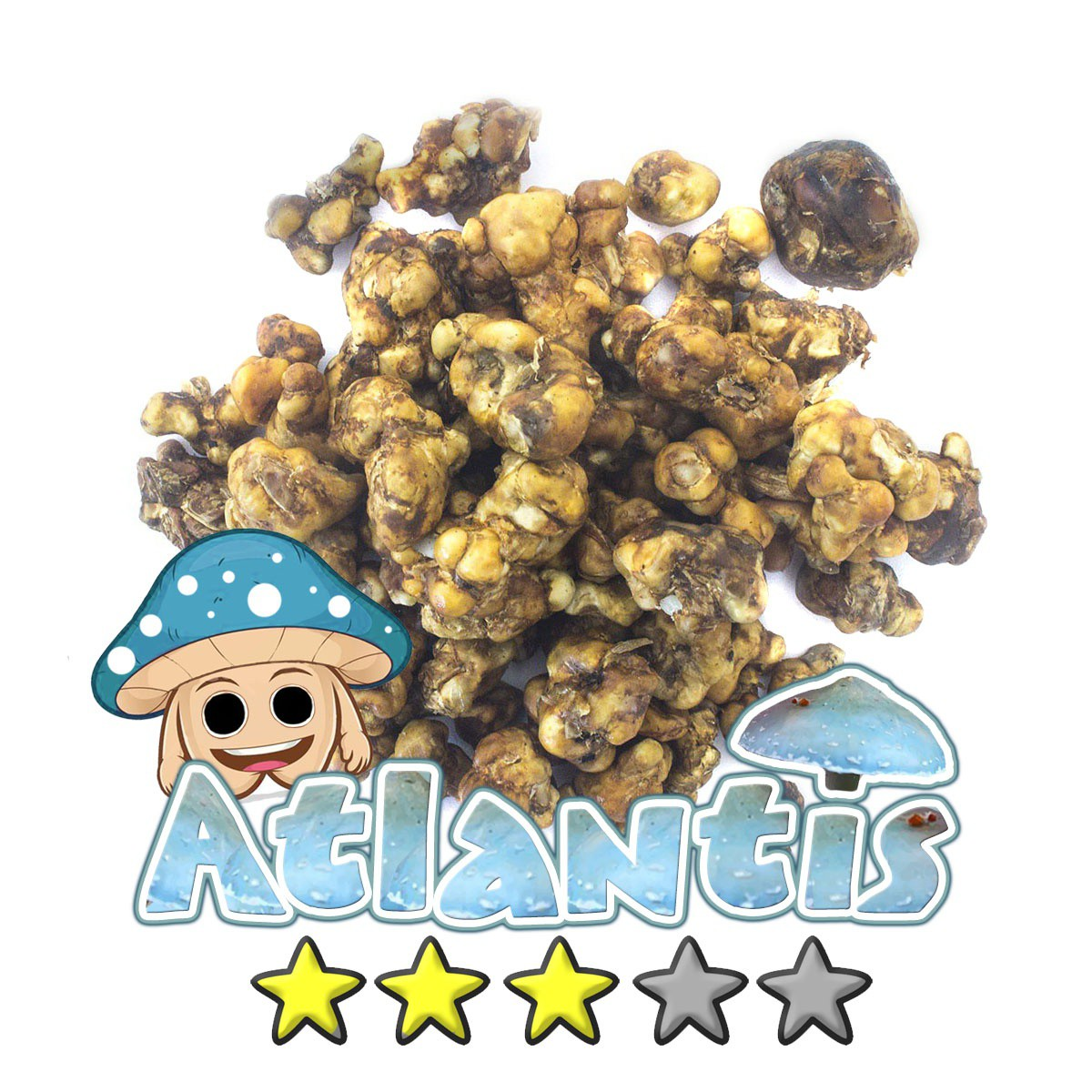 Magic Truffles | Psilocybe Atlantis 10,95 Magic Truffles