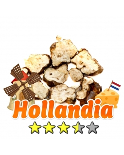 Magic Truffles | Psilocybe Hollandia