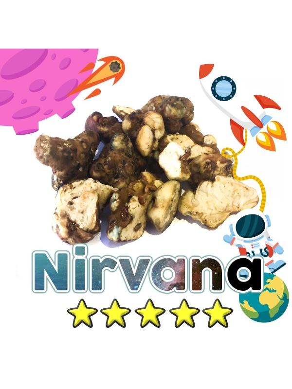 Budget Truffels | Psilocybe Nirvana € 0.00 Magische Truffels