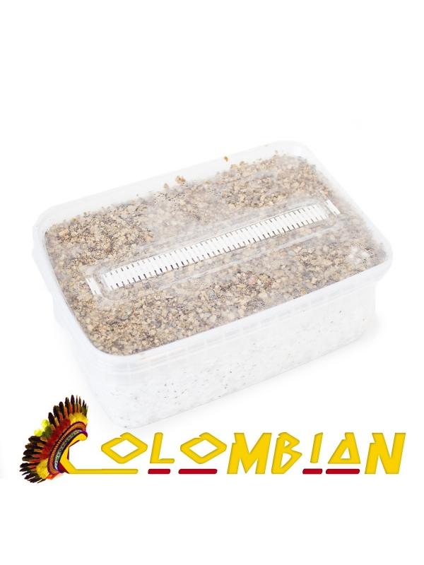 Cubensis Colombian - Magic Mushroom Grow Kit 27,95  € Magic Mushroom Growkits