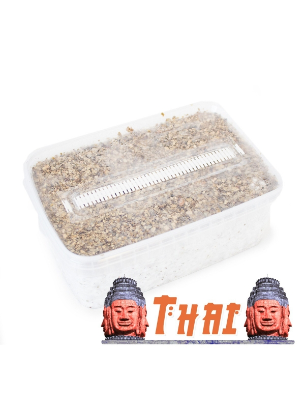 Psilocybe Cubensis Thai - Magic Mushroom Grow Kit 27,95   Magic Mushroom Growkits