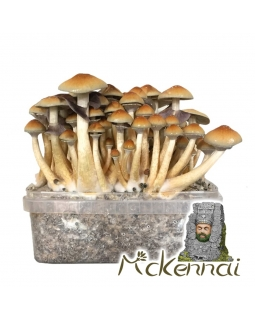Psilocybe Cubensis McKennaii - Magic Mushroom Grow Kit