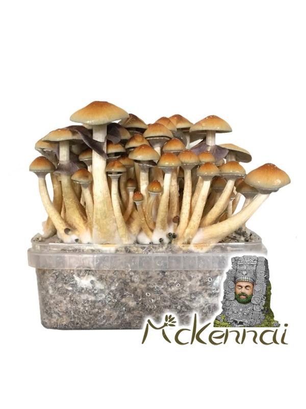 Psilocybe Cubensis McKennaii - Magic Mushroom Grow Kit 27,95  € Magic Mushroom Growkits